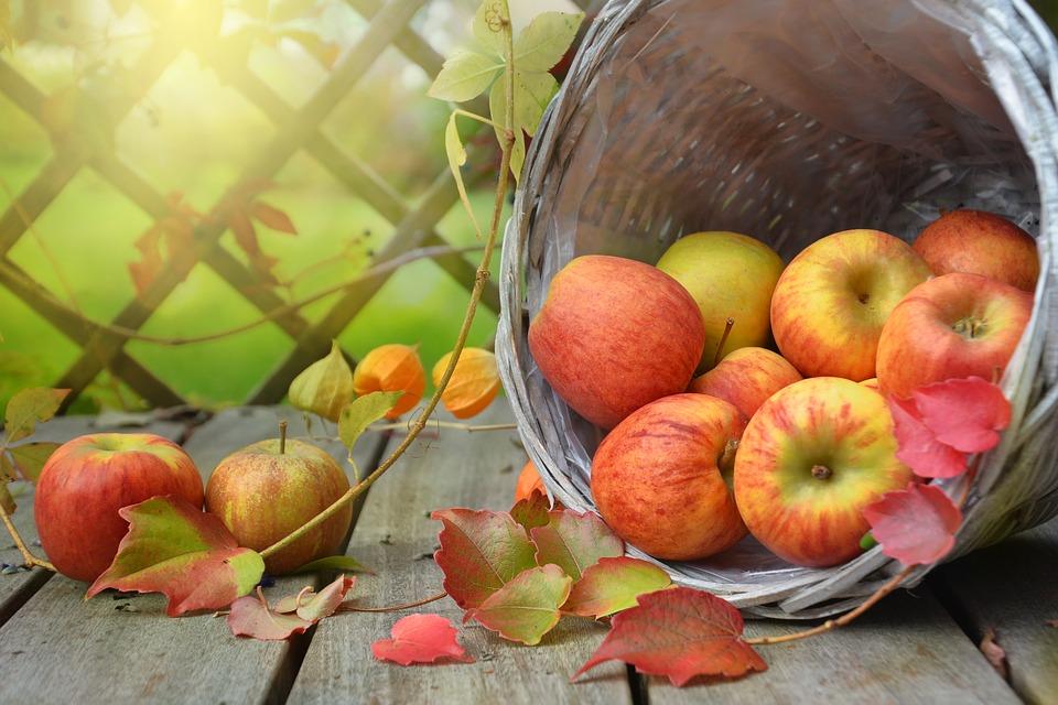Nature Autumn Leaf Apple Basket Still Life